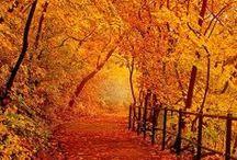 autumn / by Anne James