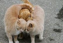 """Cute as a Button / Cute things brighten our day! What makes you go """"awww""""? / by Tigerprint"""