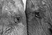 """Elephants Never Forget / As the saying goes, """"elephants never forget."""" Hopefully one day Alzheimer's disease will be a memory and the estimated 5.4 million people in America with the disease will never forget."""