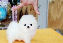 Cute Animals They're so fluffy!!! / Cutie potootie!❤️ / by 🌸Alana🎀 Ellis
