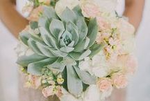 Succulents ~ Wedding Trend / Great as favors or as part of a bouquet, succulents are a huge trend right now! Succulents are an awesome unique touch and a great pop of green!  / by Madeline's Weddings & Events