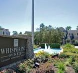 Whispering Pines Ranch- TX / Located at 8101 Research Forest Drive, The Woodlands, TX 77382. Phone #: (281) 363-3339. Whispering Pines Ranch is perfectly located minutes from The Woodlands Mall, dining, & everything you need. Your new home awaits with over the top amenities.  Residents enjoy gated access, fitness center, indoor basketball court, resort style swimming pool, sun deck, WiFi, outstanding landscaping, and more. Bring your pet and choose from a spacious one, two, or three bedroom floor plan.  @WhisperPinesApt