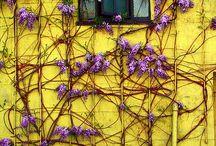 color es vida / by Heidi Leon Monges