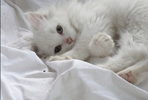 / cute /