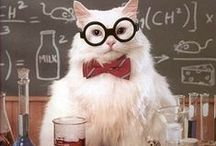 Chemistry / Ideas and activities for teaching and learning chemistry.