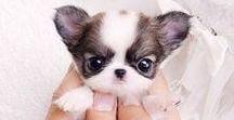 Animais Cutes