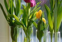 Fiori / Affascinata dalla poliedricità dei fiori...si ha una vasta scelta a seconda della circostanza!