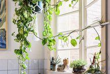 Déco avec plantes