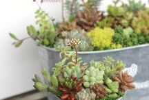 ガーデン / 育てている植物と頂き物のお花