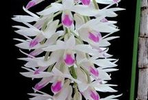 Flowers ~ Orchids / A wide variety of orchids from around the world.