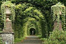 Travel ~ Ireland