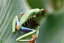 Amphibians ~ Reptiles