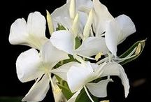 Flowers ~ Variety / A wide range of beautiful flowers throughout the world.