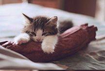 fluffy cuties