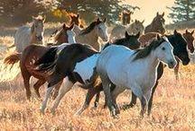 Wildlife ~ Equine
