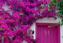 Pinks and Purples / Shades of pastels and pops of color