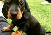 cuteness overload  / baby puppies and more
