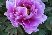 Flowers / Květiny