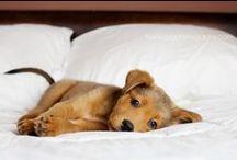 Doggie Love!! / by Eva Lagudi-Devereux