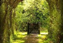 Picket Fence~Garden Gate
