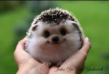 """cutest lil critters /  God created all, to be loved & cared for... / by Margie """"T""""...for TIME spent on Pinterest!!!"""