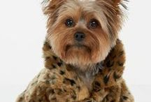 """My Yorkie had me at HELLO!! / my heart belongs to my 15 yr. old yorkie, BUDDY / by Margie """"T""""...for TIME spent on Pinterest!!!"""