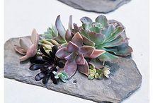 verdant world / by Jessica Womack