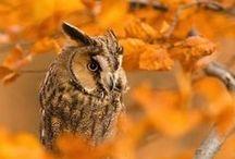 * Autumn Golden Beauty *