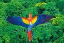 Amazonia / by Speto Art