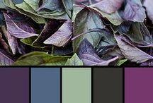 Explore the Color / Various color palettes