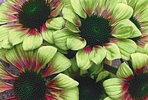 Garden Pics & Outdoor Ideas / by Susan Benz Moore