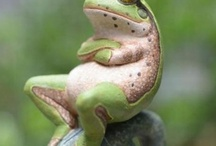 snakes, frogs,turtles and others / by Ron Moyers