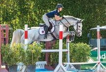 Training Tips / Training advice from top equestrian experts.