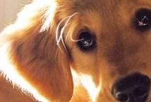 Puppy - LOVE!