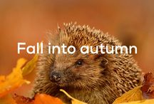 Fall into Autumn / Bye bye summer. Hello beautiful colours, wrapping up warm and kicking through the leaves. Autumn's arrived!