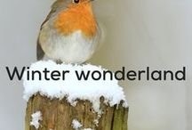 Winter Wonderland / Crisp frosty mornings, rosy cheeks from the cold, snow flakes falling and the festive season. Hello winter!