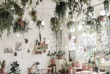 - interior coffee shops