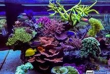 Saltwater Aquarium / Inspiration for saltwater aquariums and saltwater fish tank and aquariums with coral and tropical fish