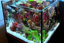 Nano Aquarium / Nano tanks are small marine aquariums you can keep in your home