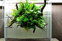 Planted aquarium / Fresh water plants and aquascaping