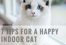 Cat Care / Helpful tips on cat care (e.g. feeding, litter box) and pet health. #petcare #cats #howtocareforyourcat