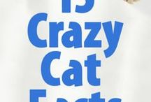 Cool Cat Facts / Bet you didn't know these cool cat facts. You learn something new about cats every day! #catfacts