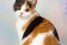 Pretty Kitties / The world's most beautiful cats. #catsofinstagram #prettykitty