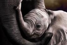 Elephants / by D. D. Falvo