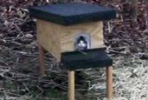DIY - Feral Cat Shelters & Feeding Stations / Alley Cat Allies recommends that outdoor cats have proper protection from inclement weather. You can build an inexpensive shelter and we can show you how. Visit www.alleycat.org/buildashelter / by Becky Robinson