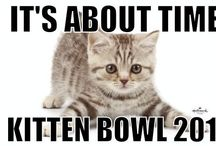 Kitten Bowl Party / Different fun