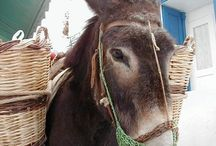 Μykonian Donkeys