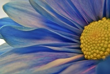 Glorious Flowers / by Patricia McGuire