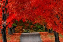 Awesome Autumn / by Patricia McGuire