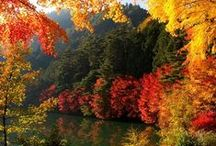 Autumn/Fall/Halloween